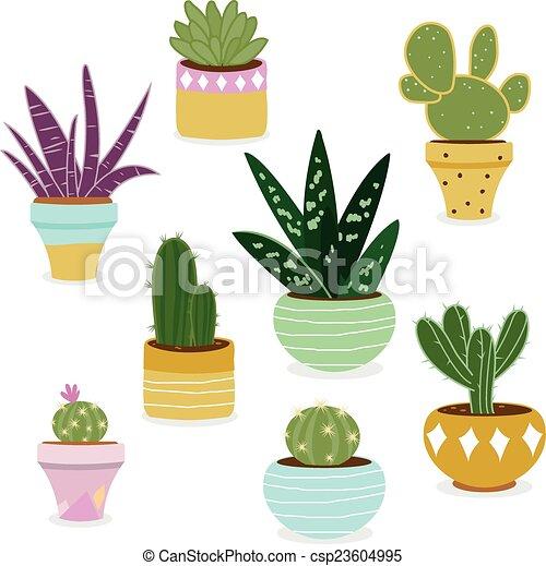 Cactus Succulent Plants In Pots Cactus And Succulent Plants Growing