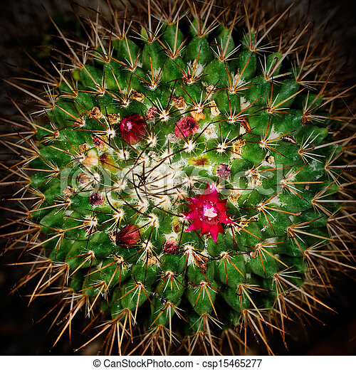 Red Cactus Square Macro