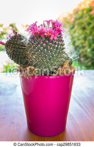 Cactus with small pink flowers cactus with small pink stock cactus with small pink flowers csp29851633 mightylinksfo Image collections