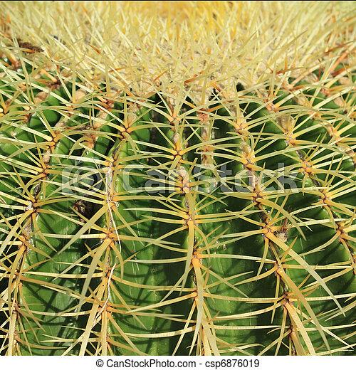 Cactuses close up  - csp6876019