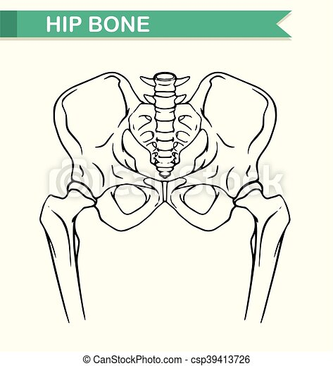 Cadera, papel, hueso humano. Hueso de la cadera, papel, humano ...