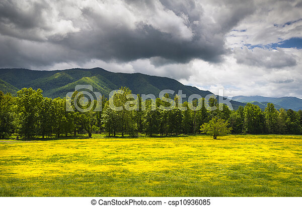 Cades Cove Spring Flowers Great Smoky Mountains National Park Fields with dramatic sky and Appalachian mountain peaks - csp10936085