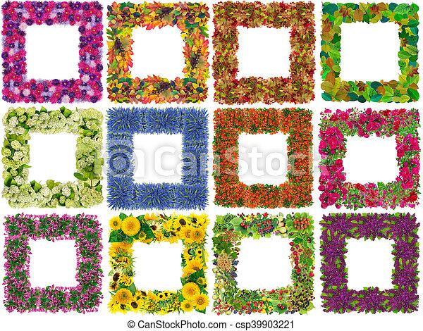 cadres, fleurs, isolé - csp39903221