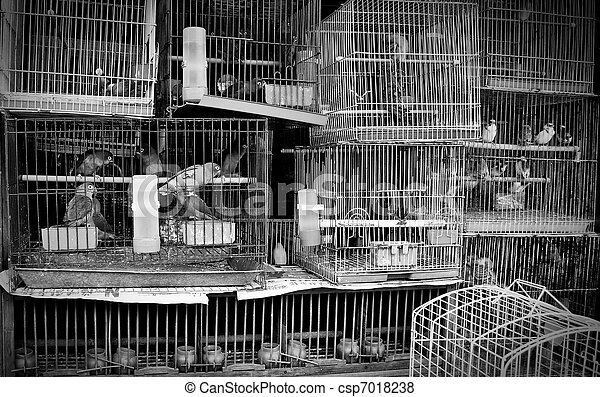 Caged Birds at pet store - csp7018238