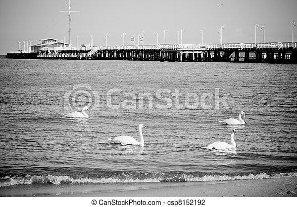 cais, pássaros - csp8152192