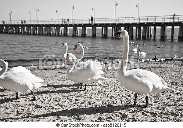 cais, pássaros - csp8126115