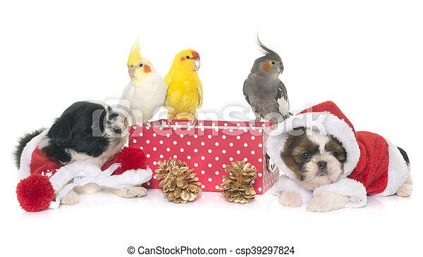 Caixa Cão Cockatiel