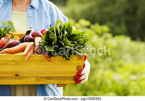 caixa, legumes, mulher, sênior, segurando - csp13005393