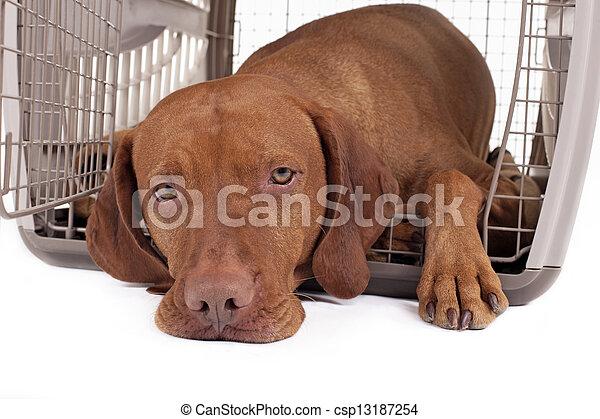Perro en caja - csp13187254