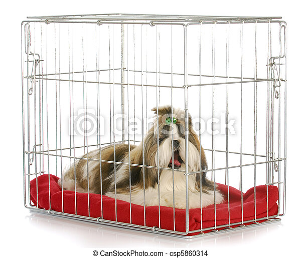 Perro en una caja - csp5860314