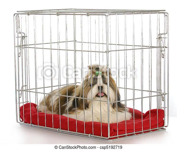 Perro en una caja - csp5192719