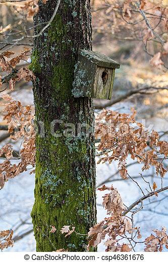 Una caja de pájaros muy antigua cubierta de liquen y musgo colgando de un árbol en primavera - csp46361676