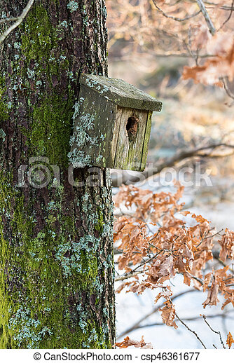 Una caja de pájaros muy antigua cubierta de liquen y musgo colgando de un árbol en primavera - csp46361677