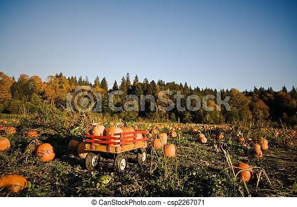 El parche de Pumpkins - csp2267071