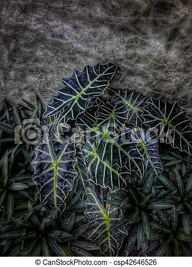 Planta de Caladio - csp42646526