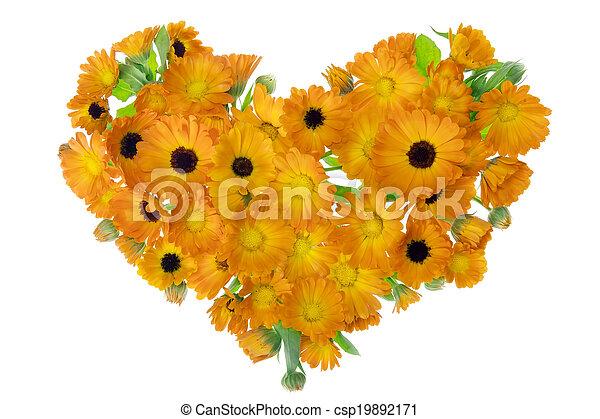 calendula, fleurs, herat, isolé - csp19892171