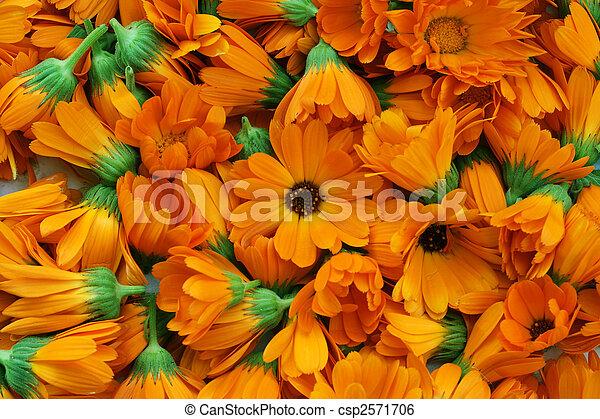 calendula, fleurs - csp2571706