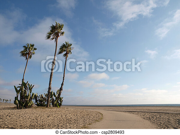 California Beach Palms Sand Sun And Palm Trees Grace A Stock