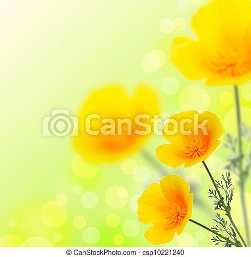 California golden poppy flowersmmer background california golden poppy csp10221240 mightylinksfo