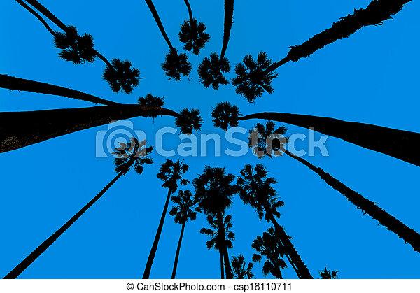 California Palm trees view from below in Santa Barbara - csp18110711