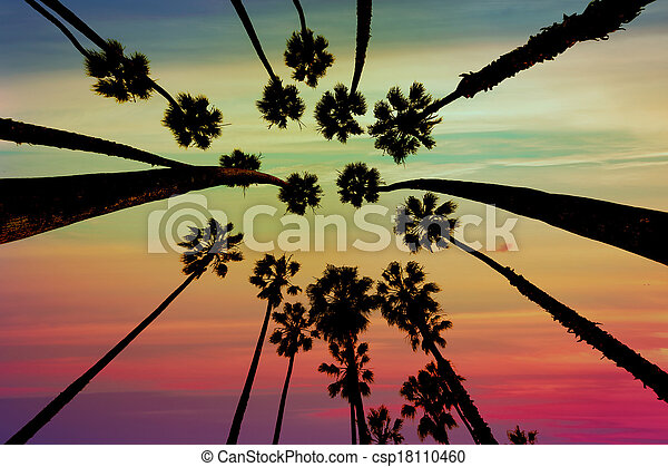California Palm trees view from below in Santa Barbara - csp18110460