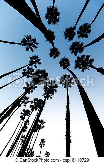 California Palm trees view from below in Santa Barbara - csp18110729