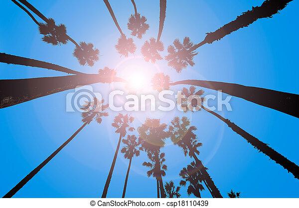 California Palm trees view from below in Santa Barbara - csp18110439