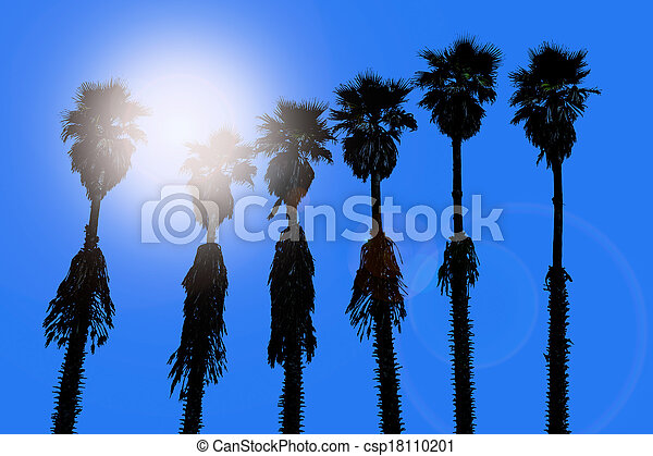 california palm trees washingtonia western surf flavour - csp18110201
