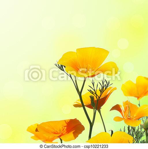 California Poppy - csp10221233