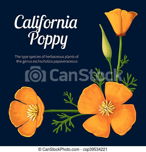 California poppy vector illustration vector illustration vector california poppy vector illustration mightylinksfo