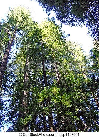 California Redwoods - csp1407001