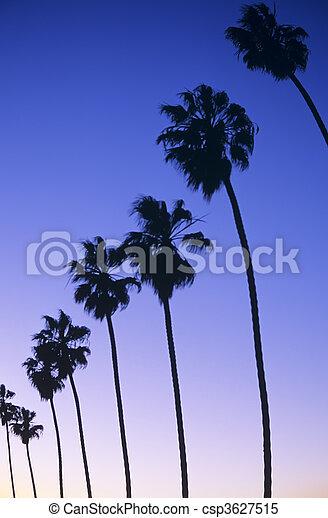 California - csp3627515