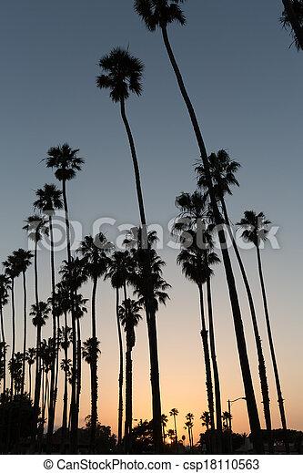 California sunset Palm tree rows in Santa Barbara - csp18110563