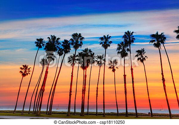 California sunset Palm tree rows in Santa Barbara - csp18110250