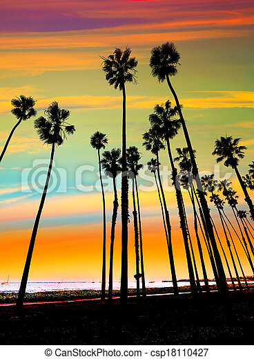 California sunset Palm tree rows in Santa Barbara - csp18110427