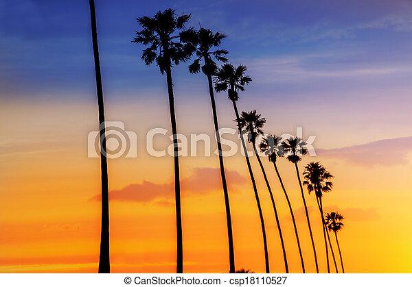 California sunset Palm tree rows in Santa Barbara - csp18110527
