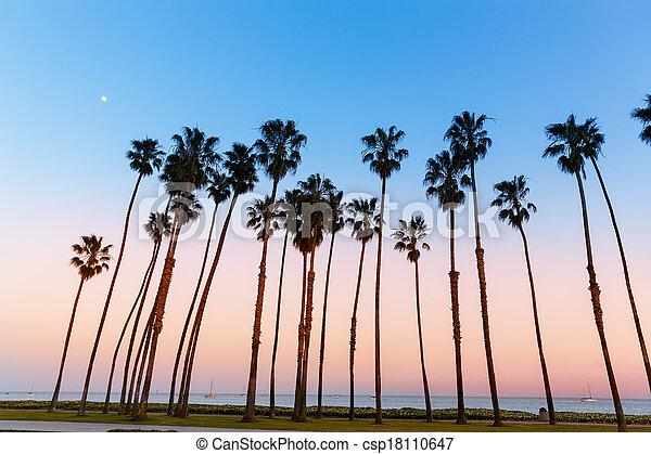 California sunset Palm tree rows in Santa Barbara - csp18110647