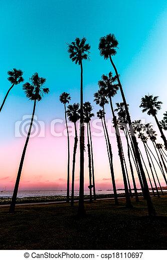 California sunset Palm tree rows in Santa Barbara - csp18110697