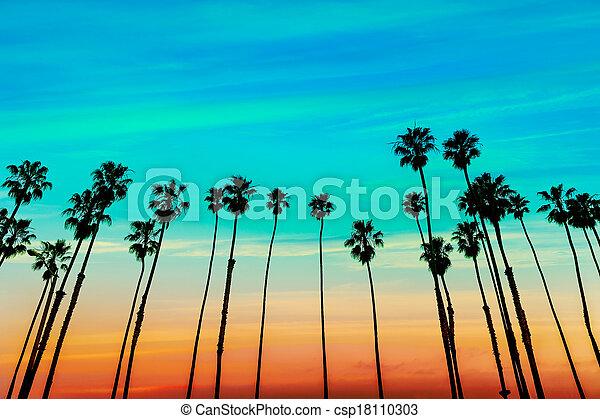 California sunset Palm tree rows in Santa Barbara - csp18110303