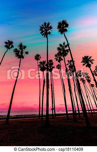 California sunset Palm tree rows in Santa Barbara - csp18110409