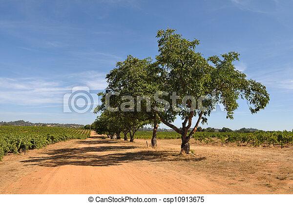 California Vineyard - csp10913675