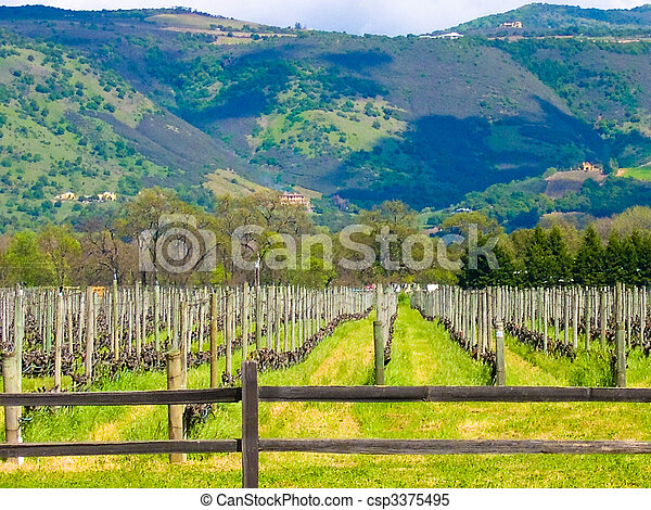 California vineyard - csp3375495