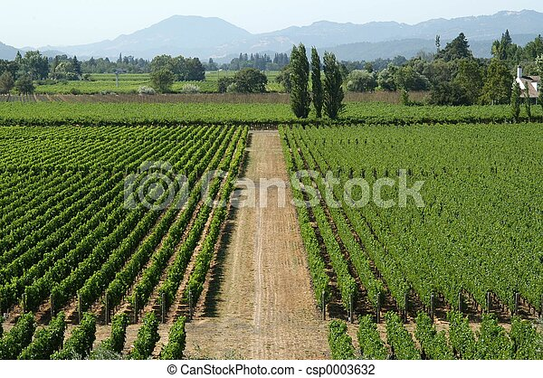 California vineyard - csp0003632