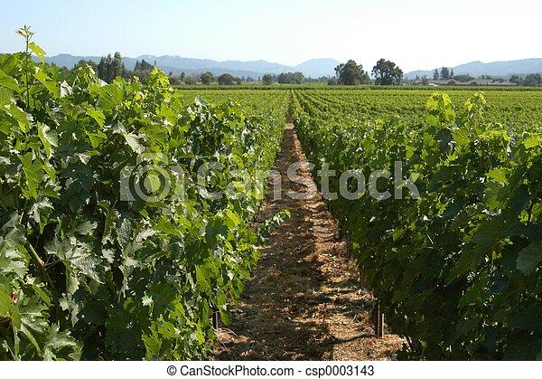 California vineyard - csp0003143