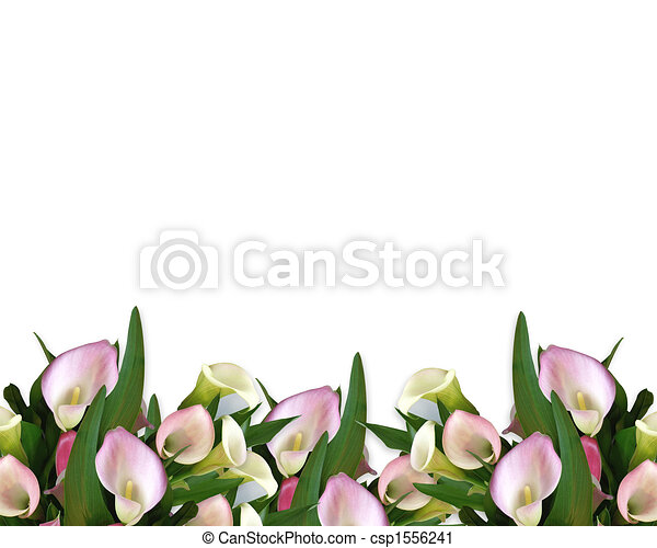 Calla lilies pink border. Image composition of pink calla lilies for ...