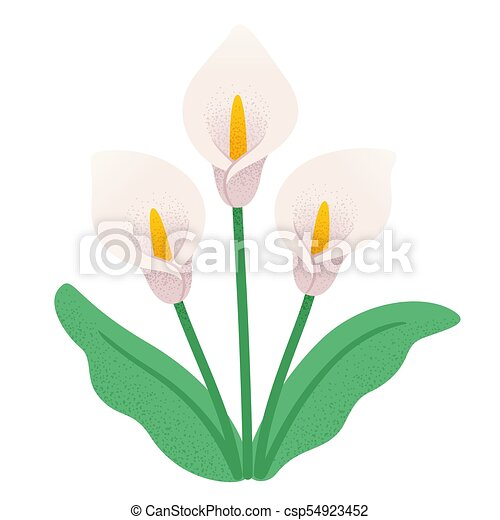 Calla Lily Flowers Calla Lily Flower Bouquet Three White Lilies