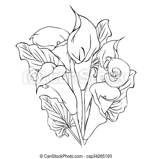 calla lily flowers vector