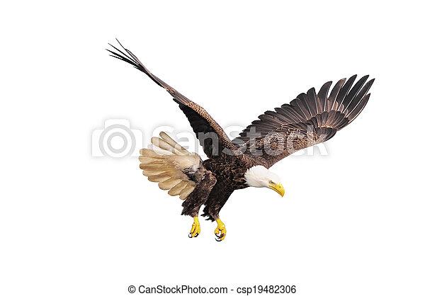 calvo, eagle. - csp19482306