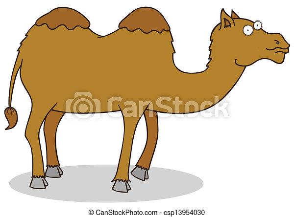 camel - csp13954030