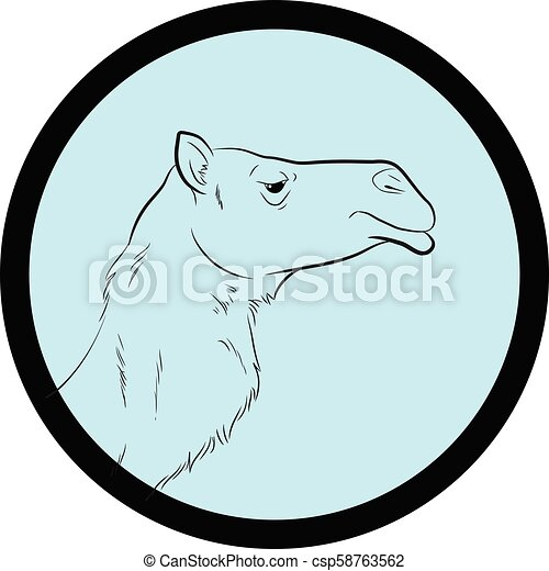 Camel Face Closeup Vector - csp58763562